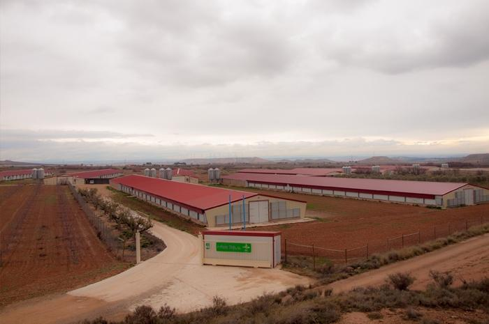 Report: poultry farm in the Rioja region, Quel